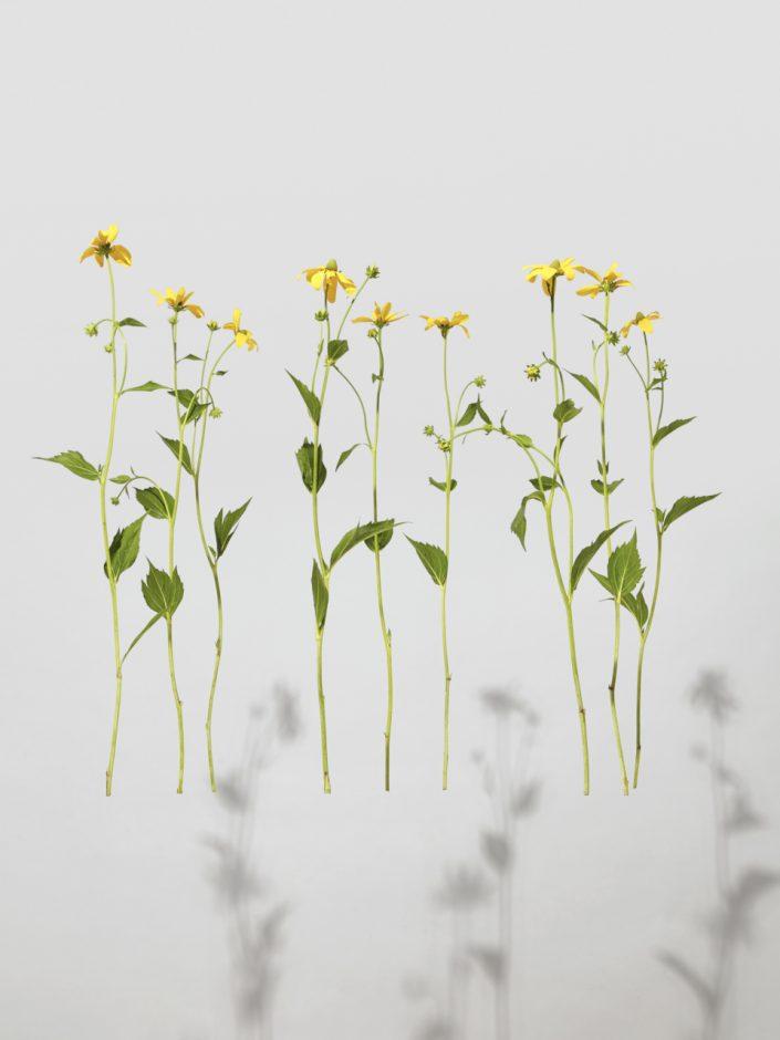 Art fleurs nature morte